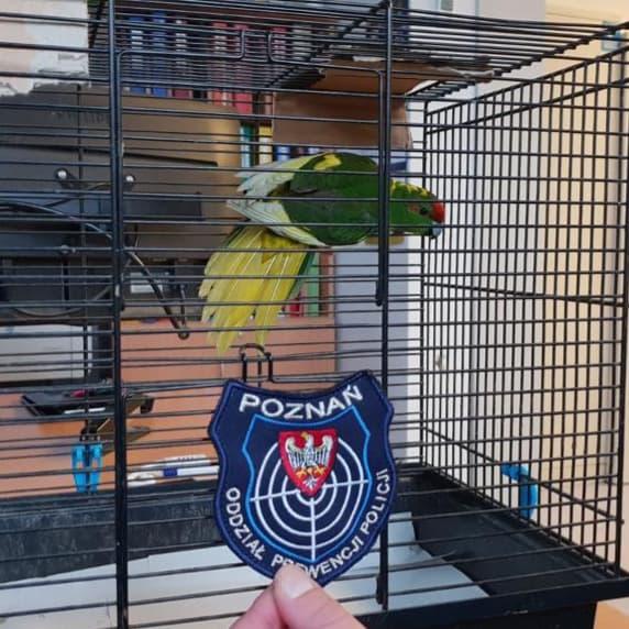 Papuga na kratkami