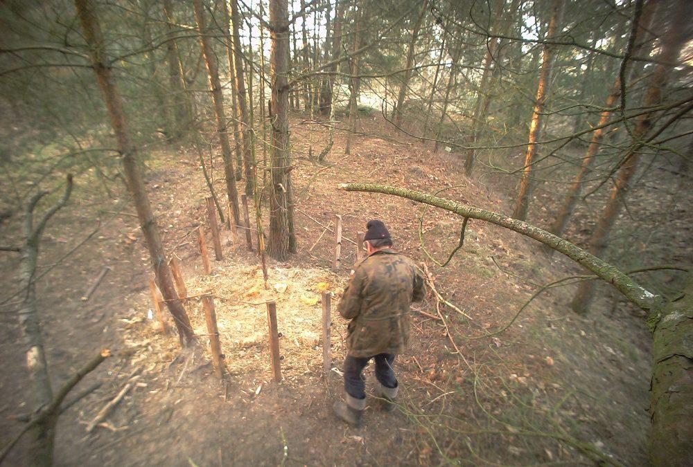 Zabijał leśne zwierzęta – wpadł