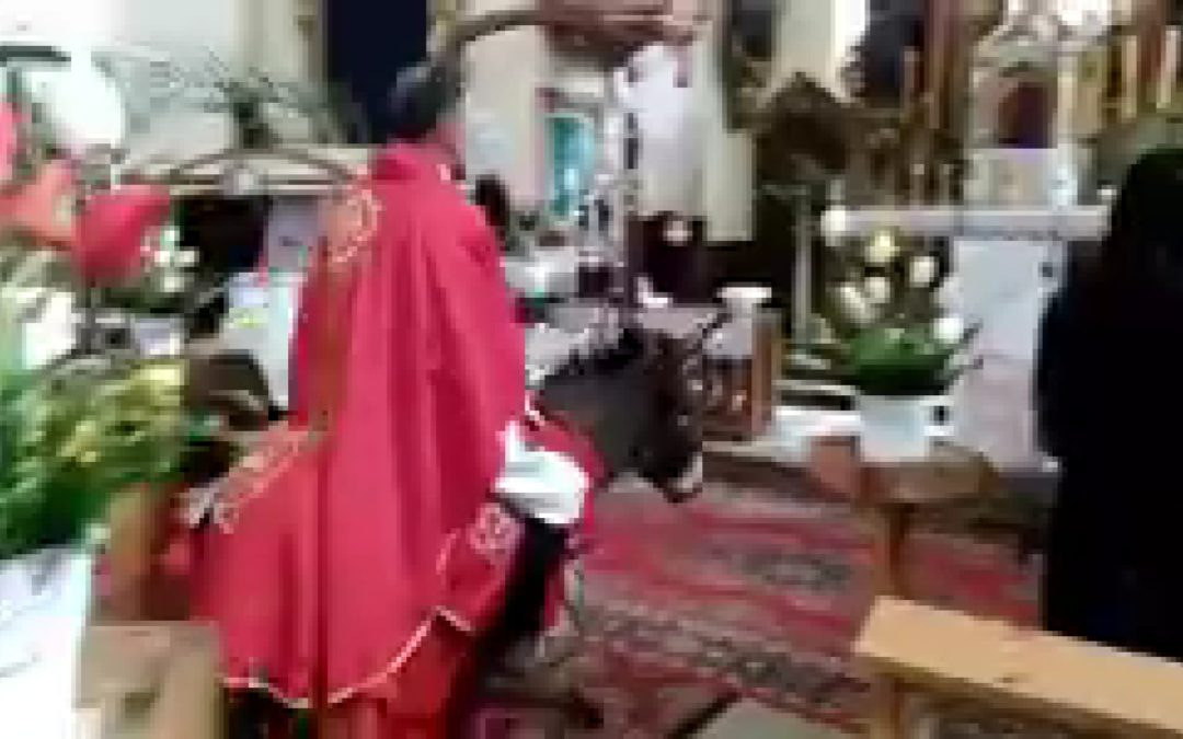 Kraj: ksiądz wjechał do kościoła na osiołku