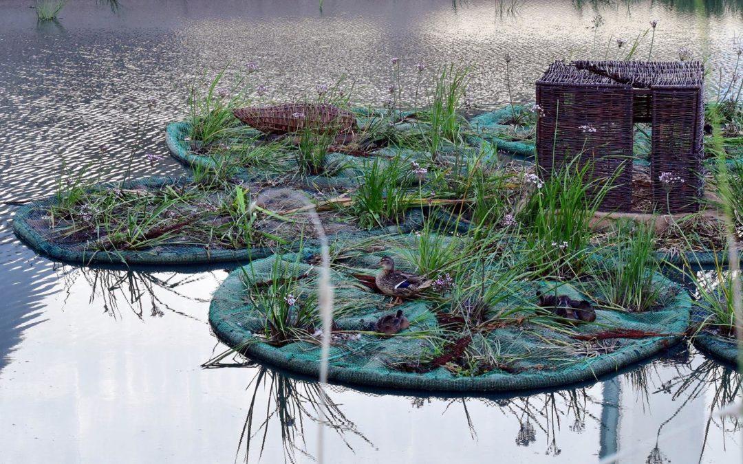 """Ogrody, które """"płyną"""" po Cybinie"""