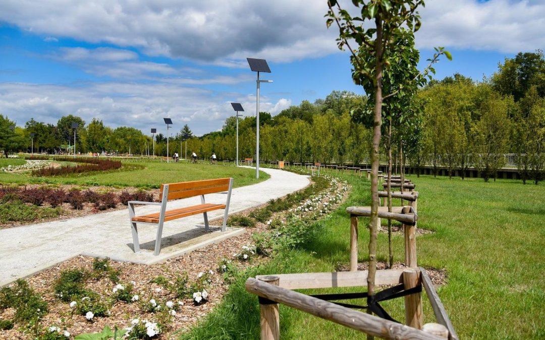 600 nowych drzew jesienią w Poznaniu
