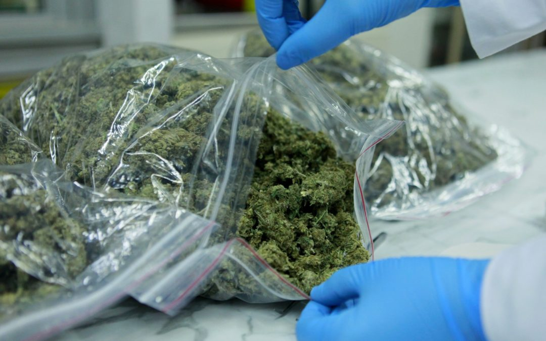 Blisko 180 kilogramów narkotyku (video)