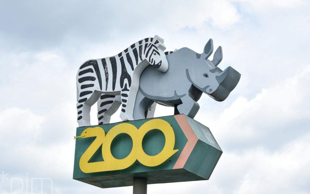W Nowym Zoo powstanie przedszkole dla zwierząt
